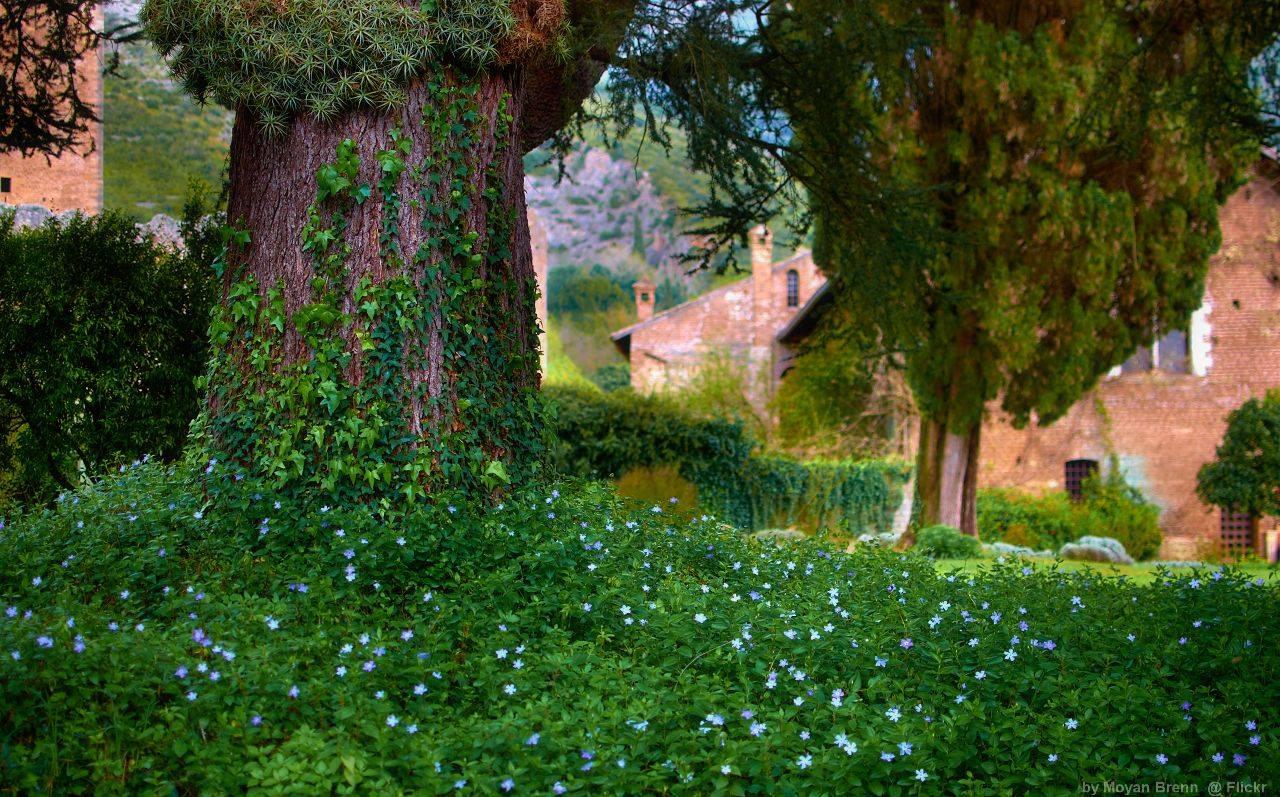 Il giardino di ninfa tra i pi belli del mondo ecco le - Il giardino di ninfa ...