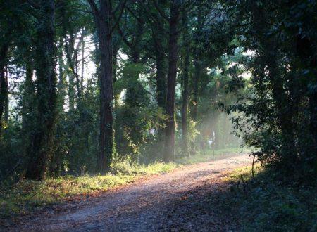 Entriamo nella foresta del Parco Nazionale del Circeo!