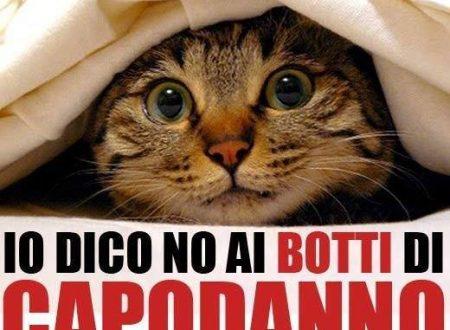 NO ai botti di Capodanno a Terracina! Evitiamo incidenti e difendiamo i nostri animali di famiglia!