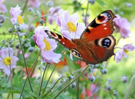 Ecco il Giardino delle Farfalle! Si trova nel Sentiero Natura vicino a Terracina!