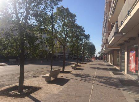 Ecco l'albero scelto per il Viale della Vittoria: la Canfora! I cittadini ora chiedono una svolta ambientalista